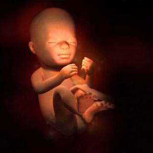 懷孕第21週