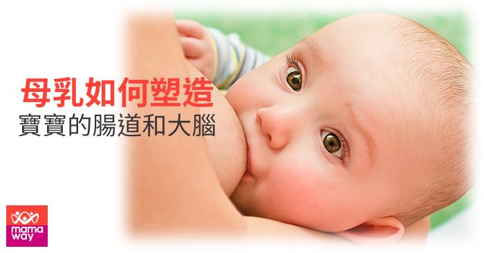 20190826_母乳如何塑造寶寶的腸道和大腦700x366