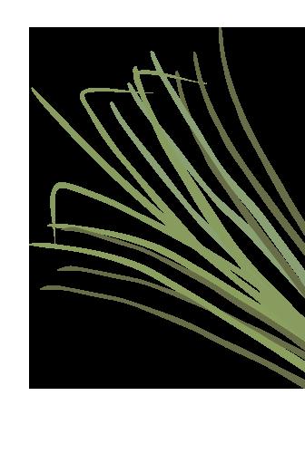 Aloe Antibacterial Hand Wash Mousse-Refill Bottle